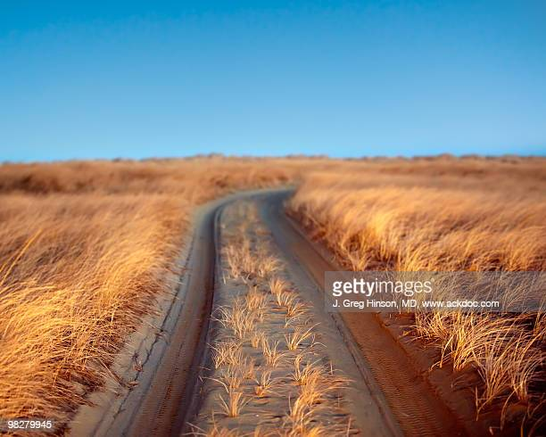 inside trail - nantucket stock pictures, royalty-free photos & images