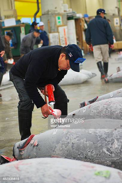 CONTENT] Inspection at the Tsukiji Fish market tuna auction at 5 am Each fish weighs between 200300 kg The market handles more than 400 different...
