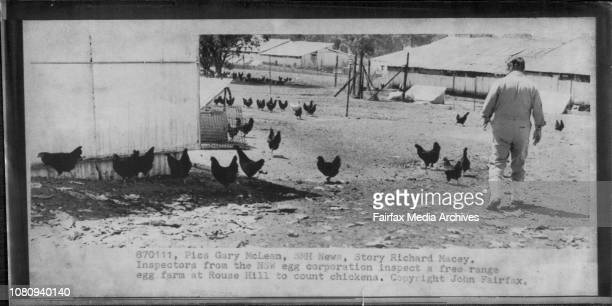 Inspectors from the NSW egg corporation inspect a free range egg farm at Rouse hill to count chickensFeathers flew yesterday NSW egg corporation and...
