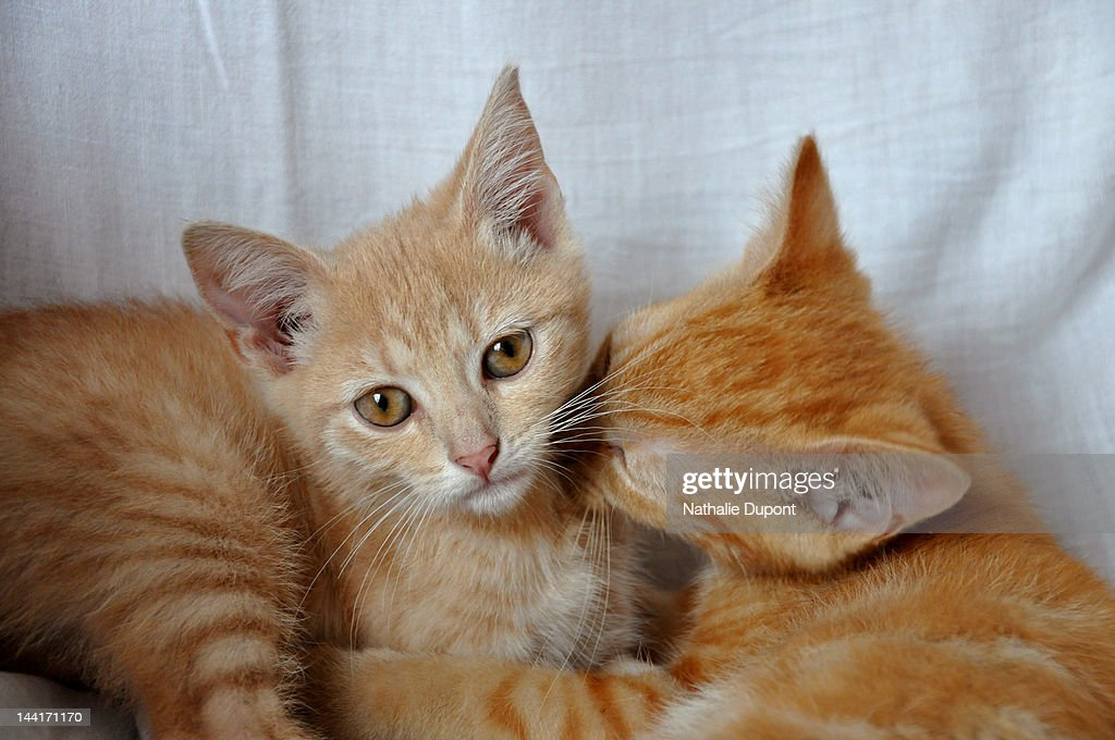 Instant tendresse entre chats : Stock Photo