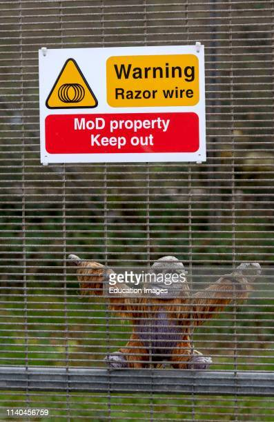 Instow North Devon England UK January 2019 Ministry of Defense warning sign of razor wire A toy gorilla placed below the sign for fun