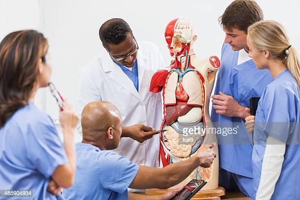 lehrer und schüler in der klasse medical school anatomie - menschlicher darm stock-fotos und bilder