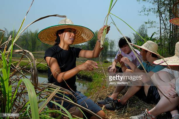 Instructor Nittaya Papasak shows students from an international school in Dhaka Bangladesh how to properly harvest lemongrass as part of the Prem...