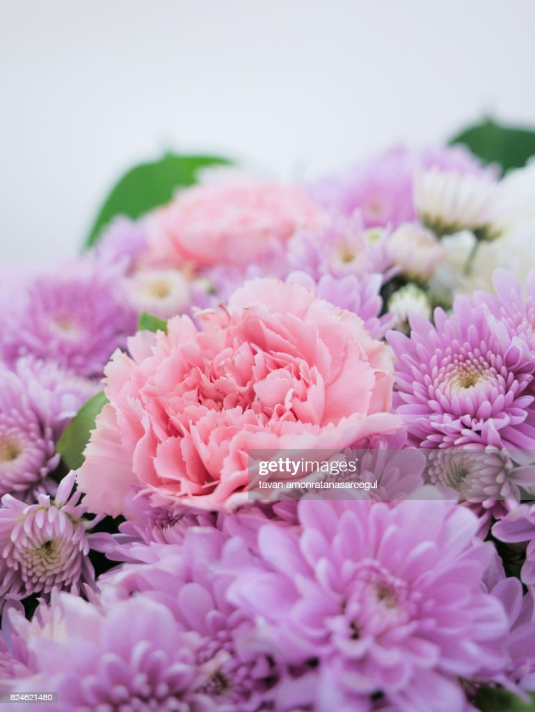 Integrity Elegance Pink Pastel Color Flowers Stock Photo Getty Images