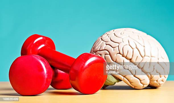 intellectual heavyweight! model brain with barbells - strength stock pictures, royalty-free photos & images