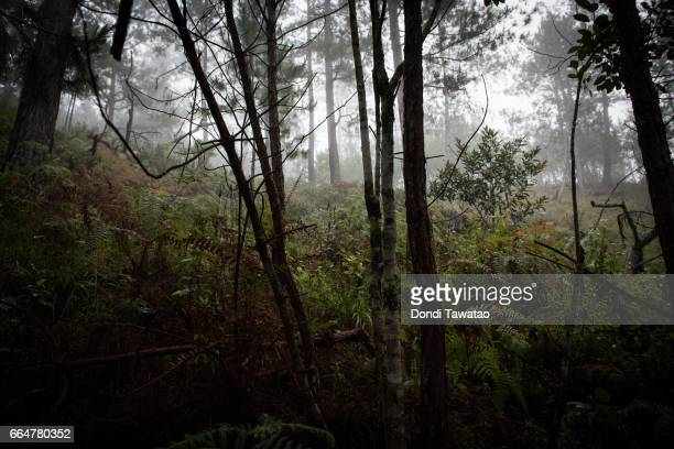 Intense cold weather and dense vegetation inside a temporary camp of New People's Army guerillas on April 1 2017 in the remote hinterlands of...