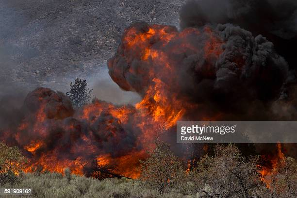 Intense flames driven by extreme drought conditions wind and hot weather sweep over a remote section of the San Bernardino National Forest during the...