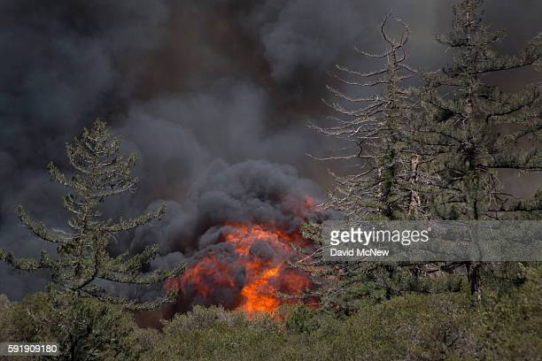 Intense flames driven by extreme drought conditions wind and hot weather sweep through a remote section of the San Bernardino National Forest during...