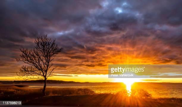 intense zonsondergang over water - verzadigde kleur stockfoto's en -beelden