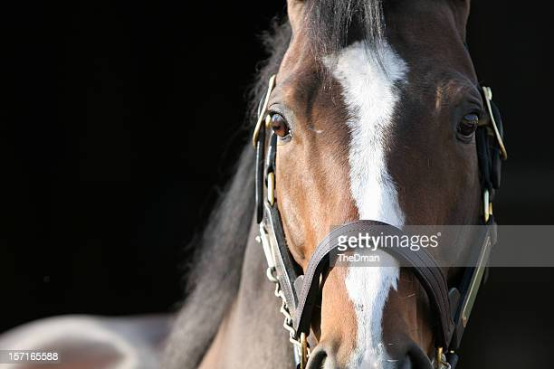intensity - racehorse stock pictures, royalty-free photos & images