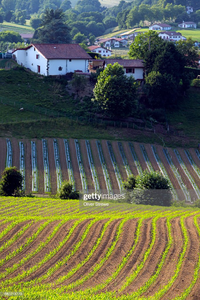 Intensive Farming Basque Country Stock Photo - Getty Images