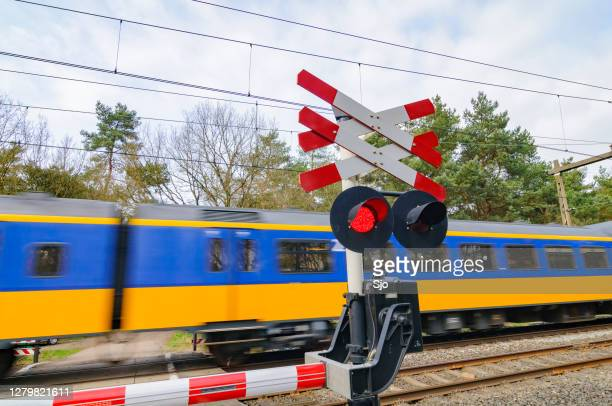 "intercity train of the nederlandse spoorwegen (ns) driving through a forest landscape - ""sjoerd van der wal"" or ""sjo"" stock pictures, royalty-free photos & images"