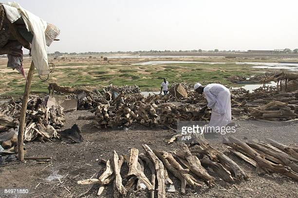 N'Djamena marche sur des charbons ardents** A man piles up wood for sale on the outskirts of the capital city N'Djamena on February 17 despite that...