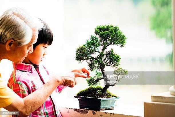 Interest In Bonsai