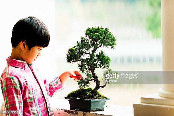 Interest In Bonsai