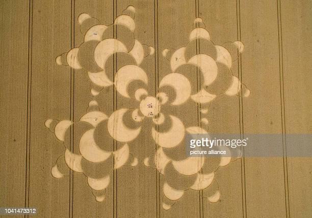 Interested parties roam a crop circle in a wheat field near Mammendorf Germany 26 July 2016 The pattern has a diameter of 180 meters...