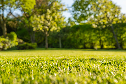 Interesting, ground level view of a shallow focus image of recently cut grass seen in a large, well-kept garden in summer. 952107108