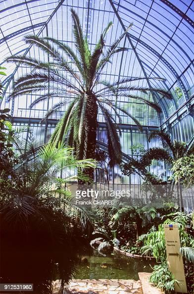 L\'interieur tropical d\'une serre du jardin d\'Auteuil, dans ...
