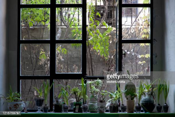 Interior detail, succulents and green plants on the kitchen window sill of basement..