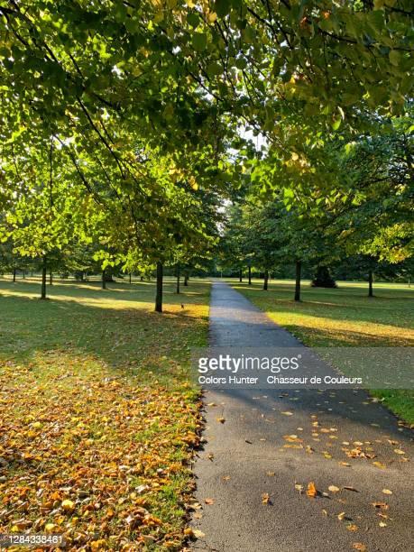interior early morning view of hyde park in london - stadsdeel stockfoto's en -beelden