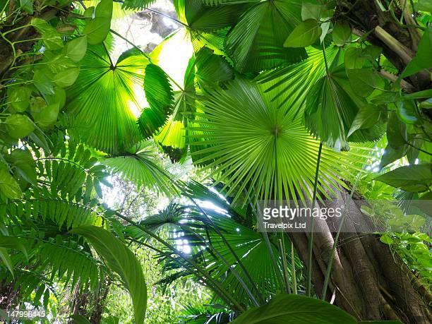 Interior of a tropical rainforest, Malaysia