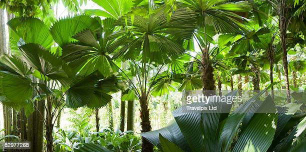 Interior of Amazon rain forest