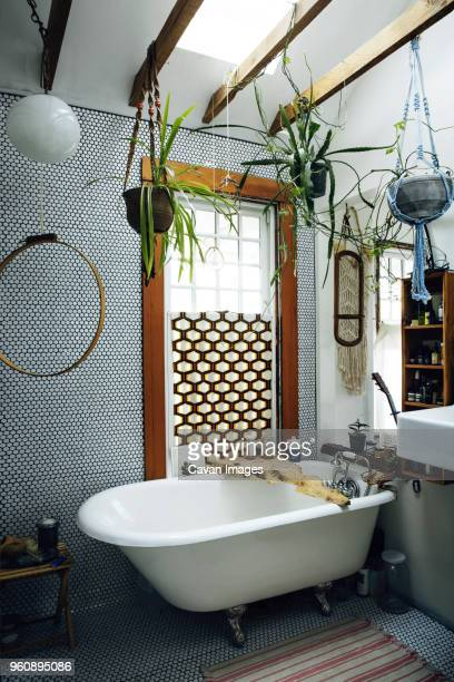 interior of bathroom - toilet planter stock pictures, royalty-free photos & images