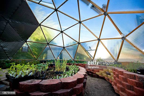 interior of beautiful greenhouse dome - dome stock pictures, royalty-free photos & images