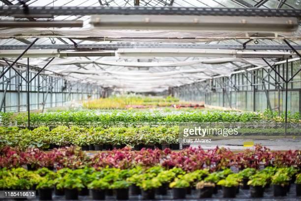 interior of brightly lit greenhouse - biología fotografías e imágenes de stock