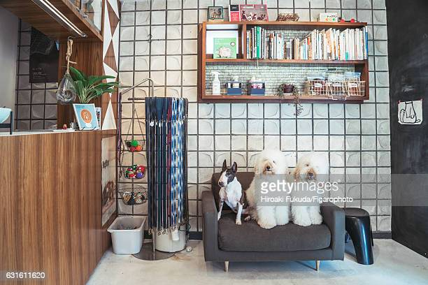Interior of Dog Man is photographed for Madame Figaro on October 20 2016 in Tokyo Japan CREDIT MUST READ Hiroaki Fukuda/Figarophoto/Contour by Getty...