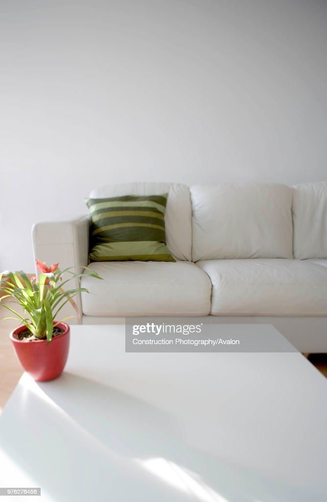 Interior side lit view of living room seating area, including coffee table, white sofa and plant. : ニュース写真