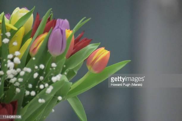 Interior. Tulip Bouquet in a vase