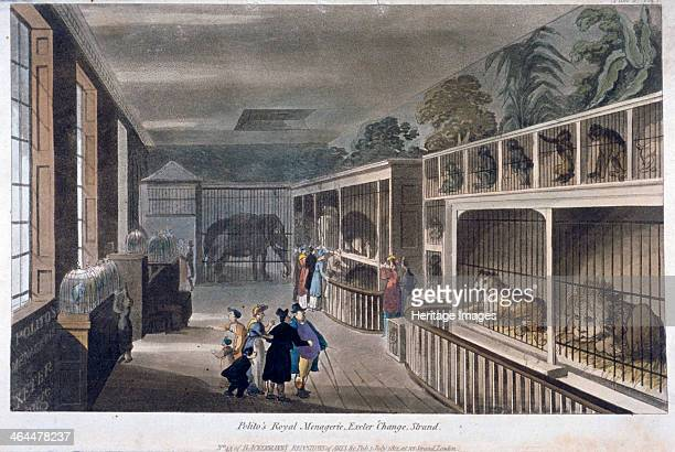 Interior view of Polito's Royal Menagerie Exeter Change Strand Westminster London 1812
