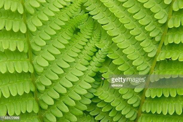 Interlocking Fern leaves