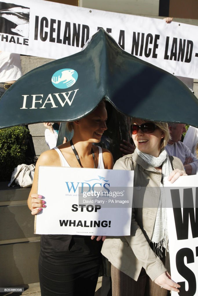 IFAW 'Point the Finger of Blame' campaign : News Photo