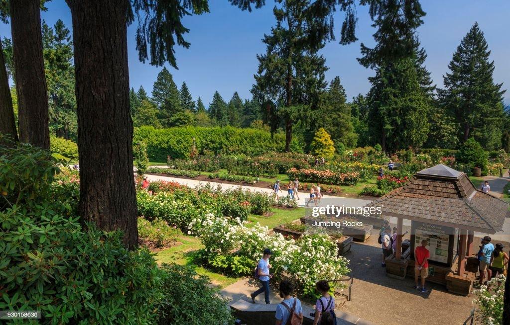 International Rose Test Garden, Portland, Oregon, USA. News Photo ...