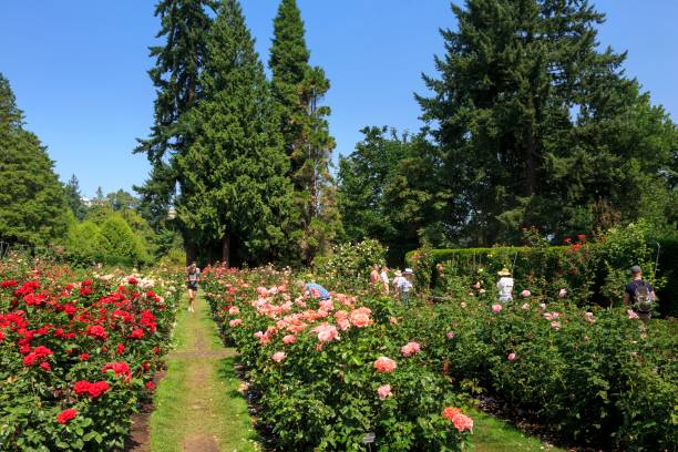International Rose Test Garden, Portland, Oregon Pictures | Getty Images