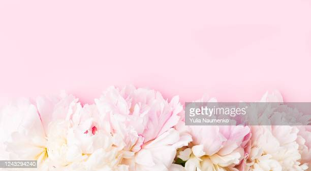 international womens day. stylish pink peonies flat lay. pink and white peonies border on pink paper with space for text. happy mothers day, floral greeting card mockup. valentine's day. - valentine' day stock pictures, royalty-free photos & images