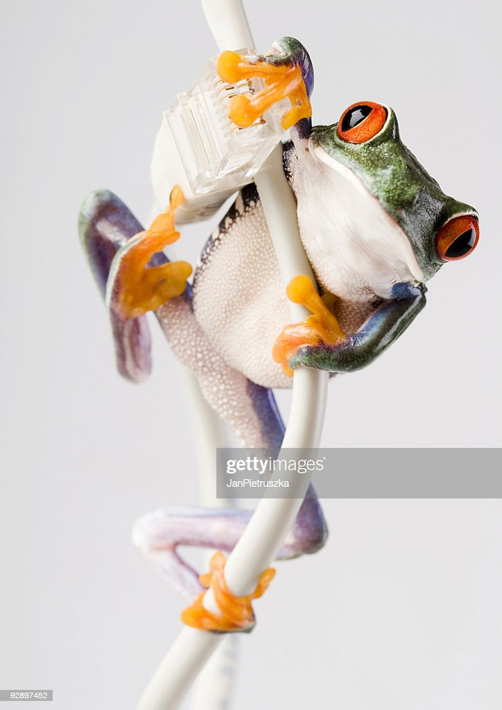 internet frog stock photo getty images