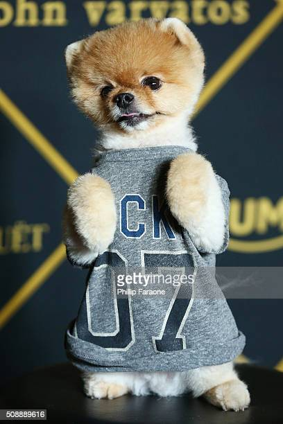Internet personality Jiff attends Maxim Magazine and Bootsy Bellows Super Bowl Party 2016 at Treasure Island on February 6 2016 in San Francisco...