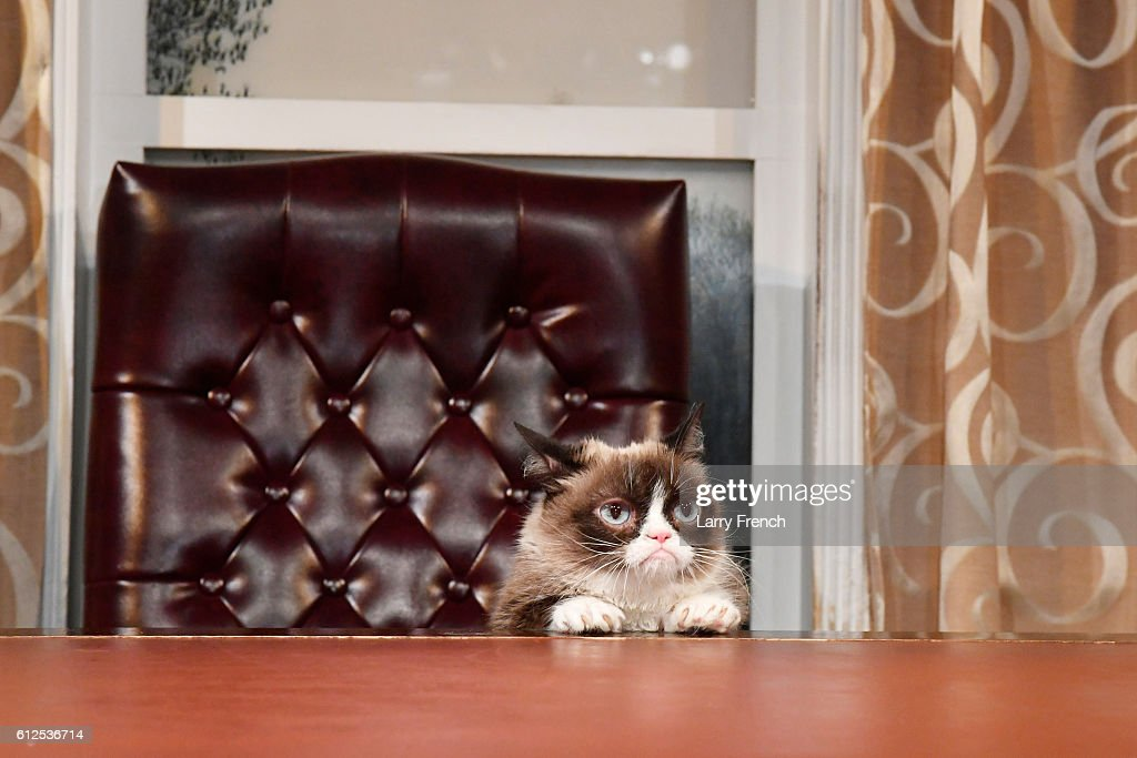 """Internet Phenomenon Grumpy Cat Brings Her Iconic """"No Face"""" to Madame Tussauds Washington, DC for a Meet-and-Greet with Fans : News Photo"""