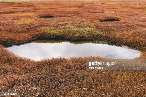 intertidal pool of standing water with marsh grasses at dusk in a national seashore reserve in california, usa - pond stock pictures, royalty-free photos & images