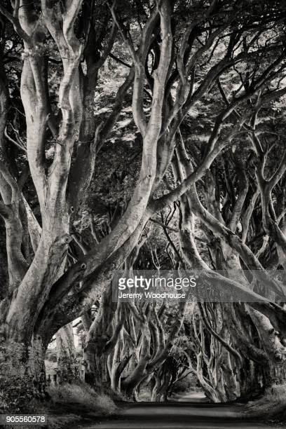intertwined tree branches over path - dicht stock-fotos und bilder