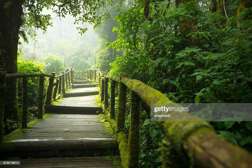 Inthanon mountain footpath : Stock Photo