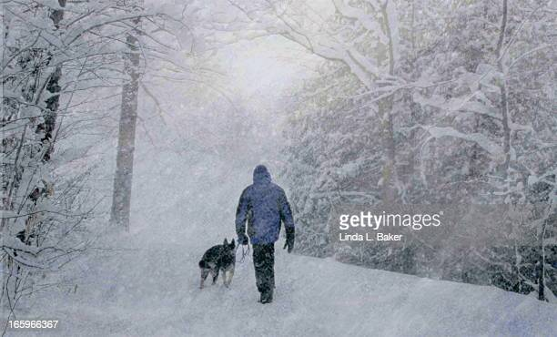 into a white squall - snow squall stock photos and pictures