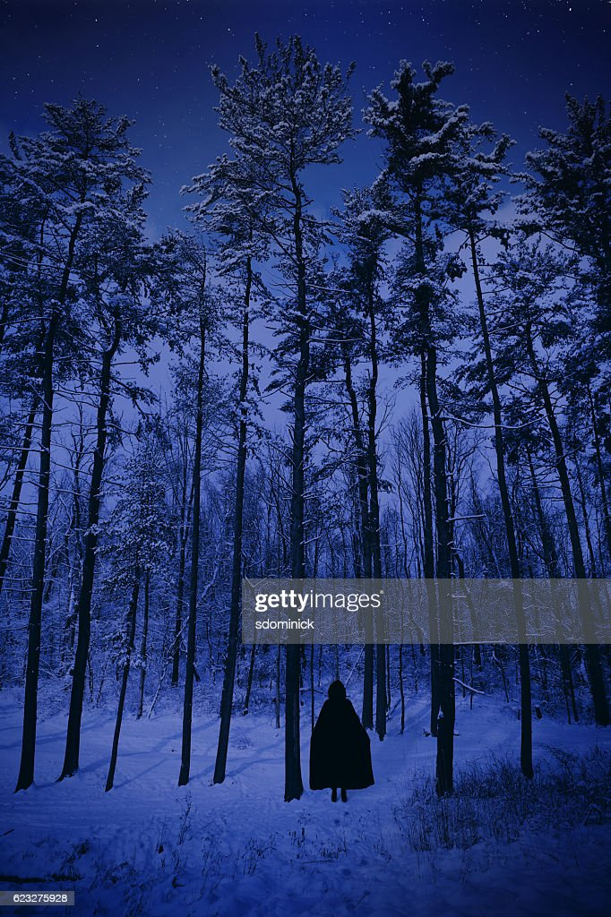 into the cold dark winter forest stock photo getty images