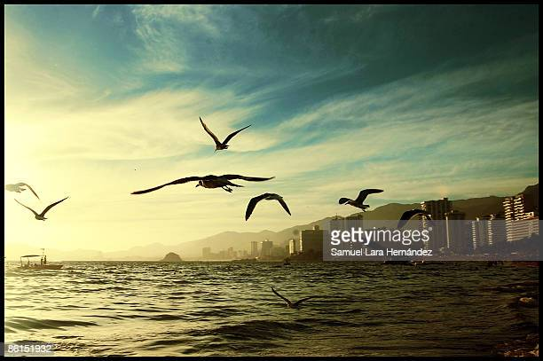 into the sea - acapulco stock pictures, royalty-free photos & images