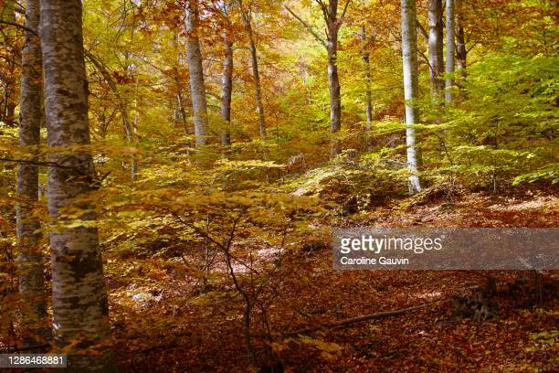 into the woods - france stock pictures, royalty-free photos & images