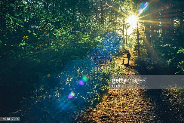 into the woods - woodland stock pictures, royalty-free photos & images