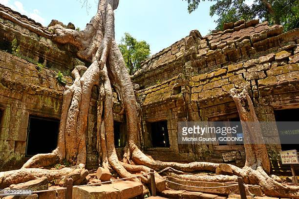 Intricate tree roots at Ta Prohm Temple